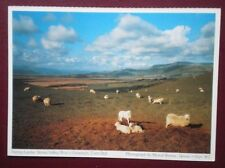 POSTCARD MERIONETHSHIRE DOVEY VALLEY - SPRING LAMBS