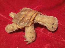 Alte Steiff Schildkröte Slo mit Knopf - Mohair - 14 cm - 60iger Jahre