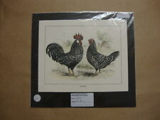 Hand Coloured Genuine Old Print of Two Anconas. by Illustrated London News