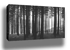 FOREST TREES BLACK AND WHITE PHOTO HUGE FRAMED CANVAS PRINT - READY TO HANG!