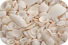 White Shell Mix (125-150 Seashells) 500g Small Wedding Shells, MIixed Sea Shells