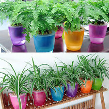 Cute Transparent Self Watering Planter Flower Pot For Home Garden Decor