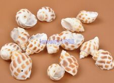 10pcs Drilled Sea Shell Ocean Aquarium Craft Decor Natural Mini Conch 25-35MM