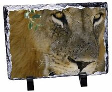 Lions Face Photo Slate Christmas Gift Ornament, AT-19SL