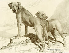 RHODESIAN RIDGEBACK CHARMING DOG GREETINGS NOTE CARD TWO BEAUTIFUL STANDING DOGS