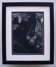 """Awesome BRASSAI 1930s Vintage Photogravure """"Hunter of the Night"""" FRAMED COA"""