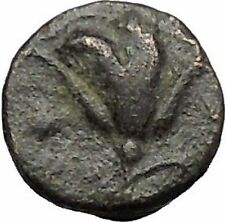 RHODES Island Off CARIA 394BC Nymph Rhodos ROSE Ancient Greek Coin i49605