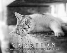 Vacation Home Motivational Poster Art Print Travel Agency Cat Kitten Pet MVP505