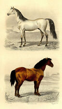 Décoration Cheval Arabe & Percheron -Traviès Gravure originale 19e