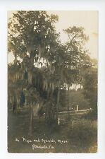 Pines & Spanish Moss in Altamonte Springs FL Rare Antique RPPC Photo ca. 1913