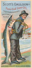 Vintage  Advertising poster  A4 Photo RE PRINT Scotts Emulsion of Cod Liver Oil