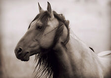 AMERICA WILD MUSTANG HORSE * LARGE A3 SiZE QUALITY CANVAS ART PRINT