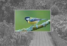 Great Tit British Garden Birds Wild Bird Fridge Magnet Garden Birds Picture Mag
