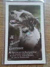 Vtg Birthday Card Postcard Cute Terrier Dog Real Photo in colour by Beagles