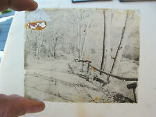 vintage magic lantern slide from out West--road in woods, a bit of damage