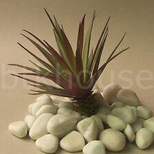 200mm Artificial Mini Reptile Cactus Succulent Desert Plant Terrarium Decor (GR)