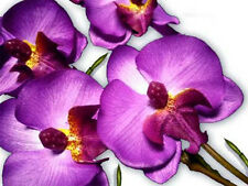 "17"" Purple Phalaenopsis Artificial Silk Orchid Flower stem Home Tabletop decor"