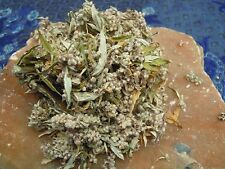 Mugwort herb Wicca/Pagan/Spell Supplies/Herbs/Incense witchcraft