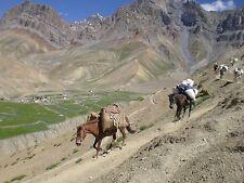 Journey to Ladakh Adventures DVD