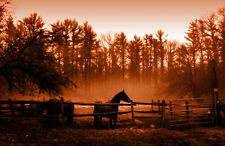 Framed Print - Brown Effect Sunset of Horses in the Paddock (Picture Poster Art)