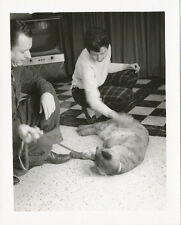 Real Tiger with People on Floor at Home * Real Photo 1950s UNUSUAL Pet  RARE 5