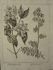 1805 DATED FLOWER PRINT ~ SYRINGA MOCK ORANGE ~ BLUE GREEK-VALERIAN