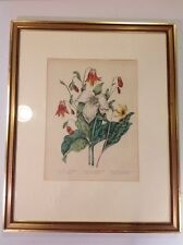 Canadian Wild Flowers Ages Fitzgibbon 1869 Hand Colored Original Lithograph