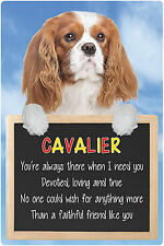 Dogs 3D Lenticular Lives Here Hang-Up Plastic Sign Cavalier Blenheim 15x22.5cm