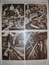 Photo article Behind the scenes at the Natural History Museum London 1947