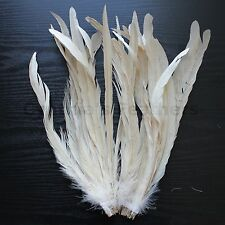 "25 pcs 12-14"" long Champagne Dyed Rooster COQUE tail Feathers for crafting, NEW"