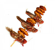 Mixed Edible Bugs Kebab Grasshoppers / Silkworms Exotic Insects Bugs Thai Food