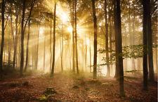 Tapete Wald am Morgen KT391 Größe: 400x280cm Baum Wälder Herbst Sonnenuntergang