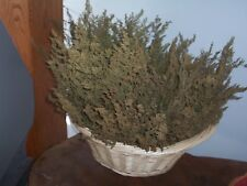 "Sweet  Annie  Artemesia (Great smell Filler)   20- 10"" to 20""stems Dried Arrange"