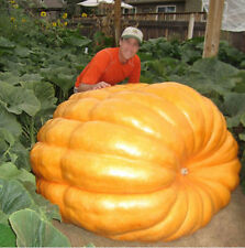 10 SEMI ZUCCA DILL'S ATLANTIC GIANT: GUINNESS WORLD RECORD 2013 - 923,6 KG