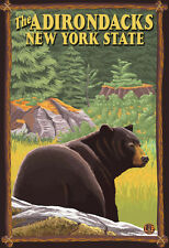 The Adirondacks, New York State - Black Bear In Forest Poster Print, 13x19