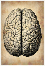 Vintage Brain Science Poster Print by NaxArt, 13x19