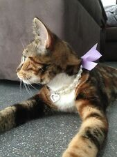 Pearl & Crystal Necklace Collar with a bow for a small Puppy Dog or Cat / Kitten
