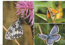 Animal Postcard - Butterflies of The Dorset Cliffs     AB2132