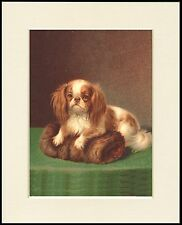 CAVALIER KING CHARLES SPANIEL LOVELY DOG PRINT READY MOUNTED