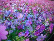 ONE-POUND  BULK  LOW GROUND COVER WILD FLOWER SEEDS MIX + Receive 1/8-POUND FREE