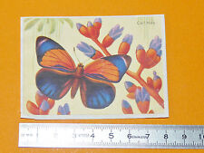 CHROMO BISCOTTES LUC 1952 PAPILLONS BUTTERFLY CALLITHEA
