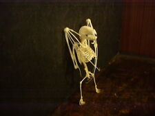 Taxidermy Bat Skeleton  Art Home wares Bar ware Weird Stuff Skull vampire