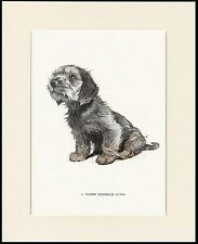 DANDIE DINMONT TERRIER PUPPY LOVELY DOG PRINT MOUNTED READY TO FRAME