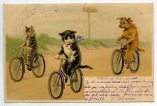 ILLUSTRATEUR   HELENA MAGUIRE MACGUIRE VELO BIKE  CHAT CHATS CAT CATS KATZE