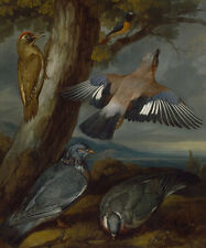 Jay, Green Woodpecker, Pigeons, and Redstart Francis Barlow Vögel B A3 01814