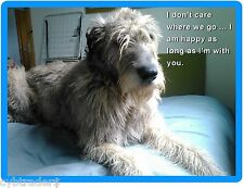 Sad Irish Wolfhound Dog Refrigerator / Tool Box Magnet Gift Card Insert