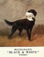 FLAT COATED RETRIEVER CHARMING DOG GREETINGS NOTE CARD BUCHANAN'S WHISKY ADVERT