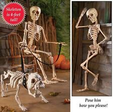 Halloween Posable Human Skeleton Holiday Decor