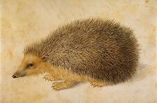 Albrecht Durer: A Hedgehog, after Durer by Hans Hoffmann - Fine Art Print