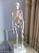 NEW Human Skeleton Model Educational Bones Anatomy Skeletal Puzzle Display Stand